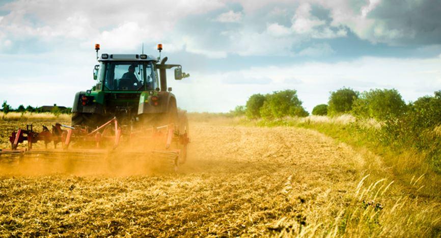 بذر کشاورزی و نهال