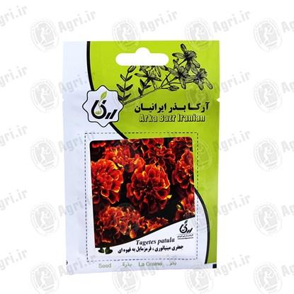 بذر گل جعفری مینیاتوری آرکا بذر ایرانیان