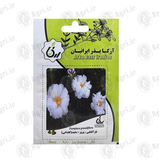 بذر گل نازآفتابی پرپر سفید گلدانی