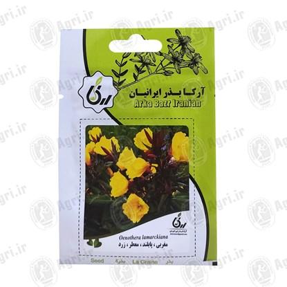 بذر گل مغربی پابلند معطر زرد