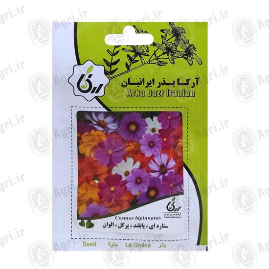 بذر گل ستاره ای پابلند پرگل الوان