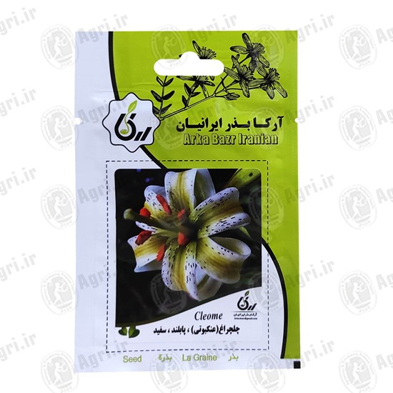 بذر گل چلچراغ عنکبونی پابلند سفید