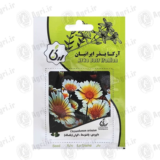 بذر گل داوودی پامتوسط الوان یکساله