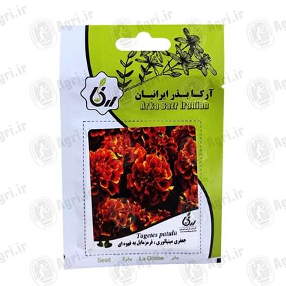 بذر گل جعفری مینیاتوری قرمز مایل به قهوه ای